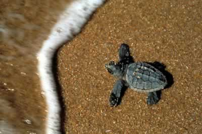 August is the turtles month in Favignana