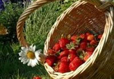 Thursday April 11, 2013 in Mazara del Vallo Open Day Strawberries Culture!