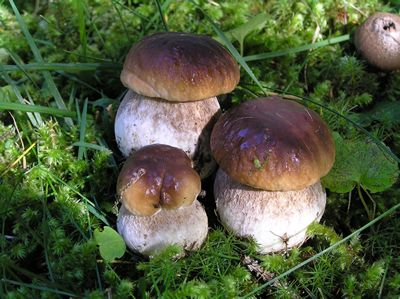 Mushrooms of Scorace in Buseto Palizzolo