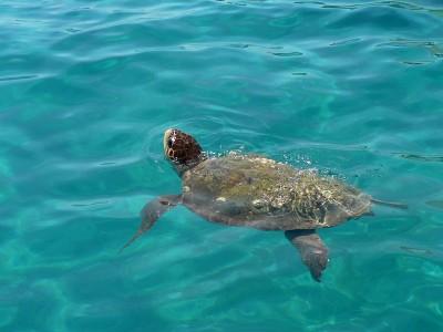 Tartaruga marina salvata a Favignana