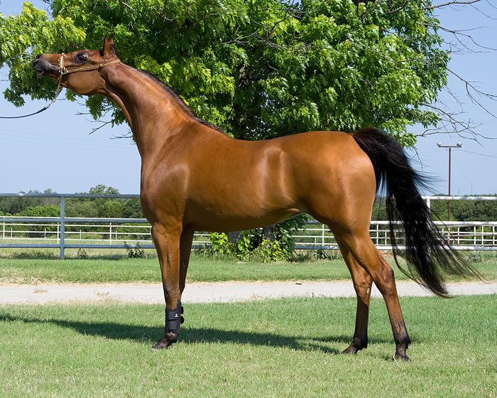 Trapani Arabian Horse Cup 2020