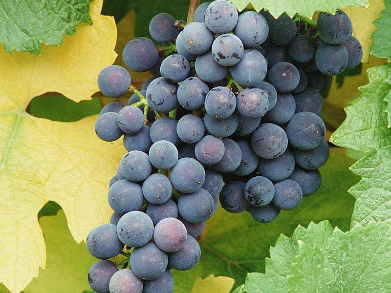 Agricoltura: produttori vitivinicoli veneti in visita in Sicilia