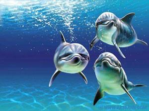 Un santuario dei cetacei a San Vito Lo Capo