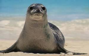Egadi: ecco l'osservatorio della foca monaca