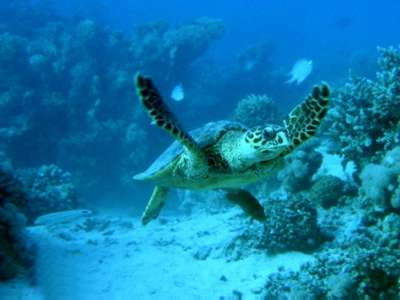 Commission to reserve the Marine Protected