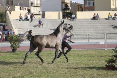 Thoroughbred back in Trapani