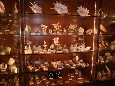 Shell museum in Favignana