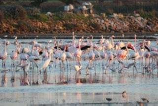 Trapani: oggi la festa delle oasi Wwf
