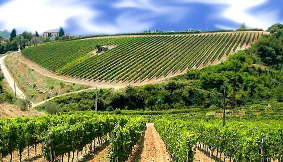 Menfi, dai vini da taglio al boom di Planeta