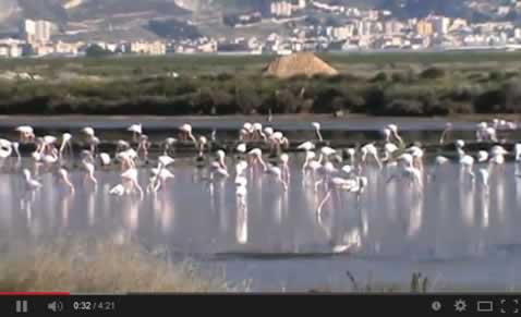 icon of the video Salt pans in Trapani